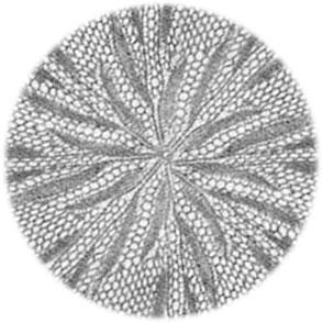 narzisse-original-photo-center-watermark